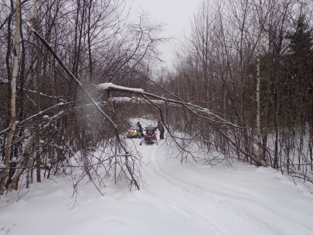 Clearing trees from the PP X-over on January 16, 2016